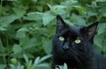 Why Catnip Isn't For Every Cat