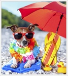 Planning Pet-Friendly Vacations