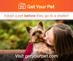 Adopt a pet with Get Your Pet! Visit getyourpet.com for direct, home-to-home pet adoption.